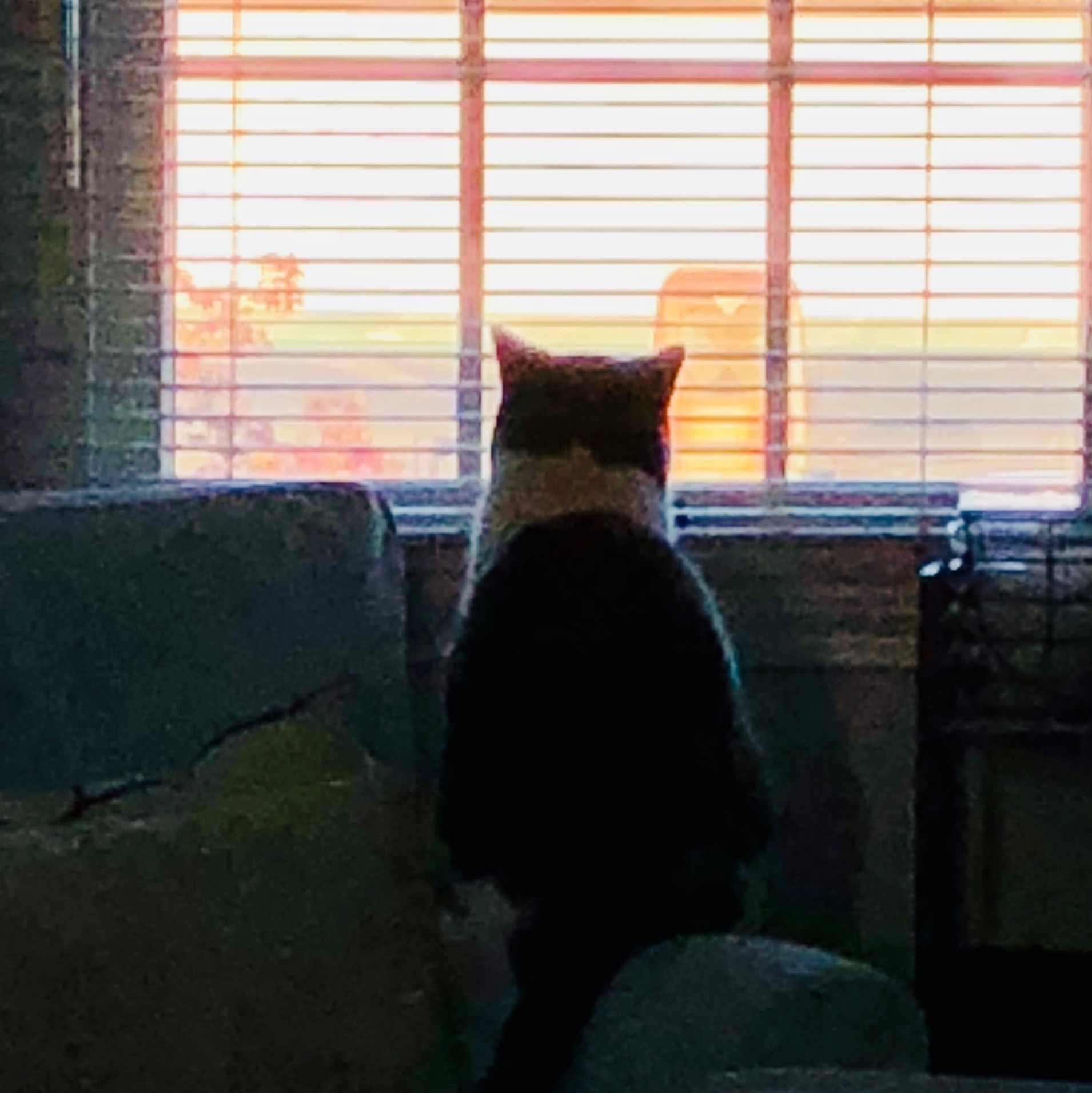photo of my cat staring out window of sun rising over some                  buildings across the street.